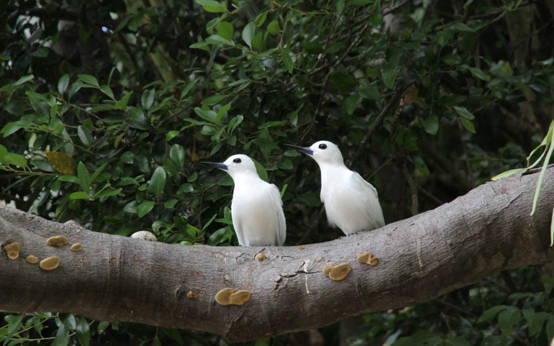 Trip to Lord Howe Island