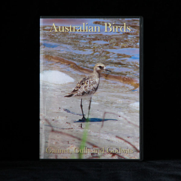 Australian Birds DVD Gannet, Gulls and Godwins
